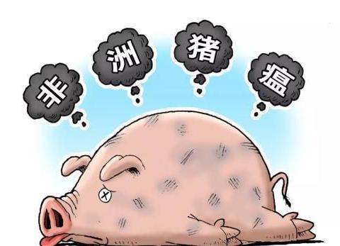 非洲猪瘟疫苗获专利,养猪人终于看见曙光了?看看专家怎么说