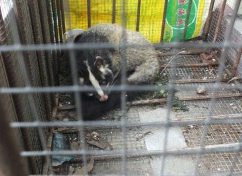 农村大哥抓到这个可爱动物,村里老人说比黄鼠狼还吓人