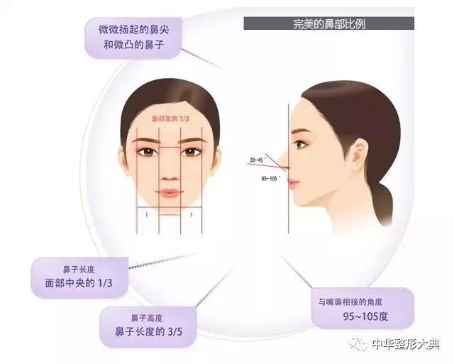 鼻部的美学标准及隆鼻方式   科普篇