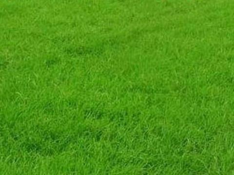 长治市主城区更换绿色草皮围挡5处3670平方米