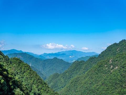 原始森林中的猴王谷,干净温顺惹人爱,比峨眉山的猴子乖多了