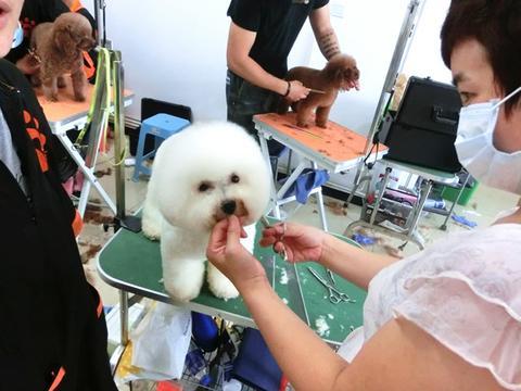 宠物美容师的工资待遇如何