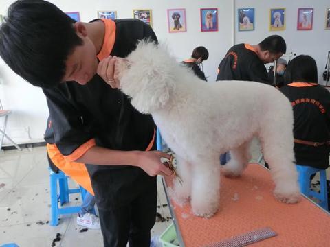 在哪里可以学宠物美容师培训