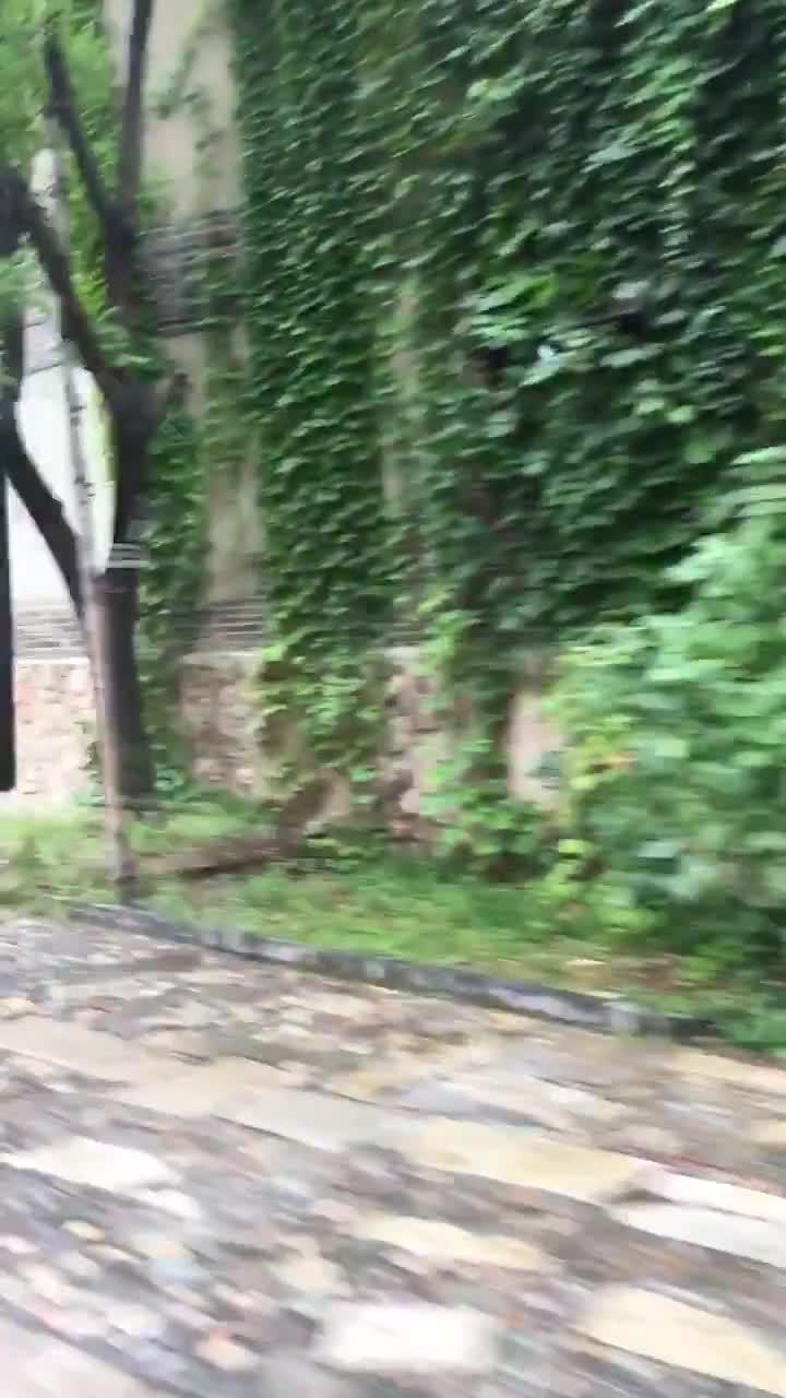 视频-日本外相访华出席中日韩外长会 晒北京郊外好风景