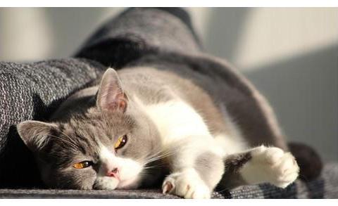 猫咪那些事:母猫喂奶期间猫藓,喂奶母猫有猫癣