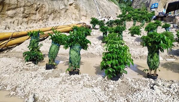 福建漳浦无证矿山和非法砂场已全面关停 21人被拘