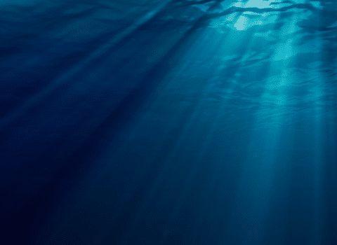 """听说你胆子大? """"深海恐惧症""""测试图, 一张比一张深刻"""