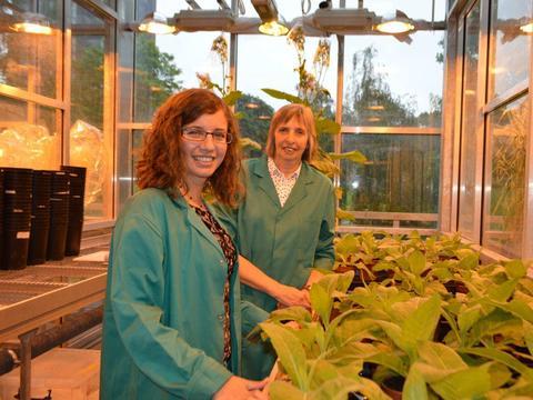 科学家发现加速植物光合作用的方法,可增加作物产量