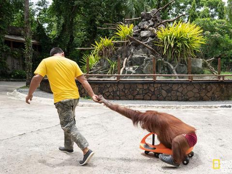 数百家动物园和水族馆被控虐待动物