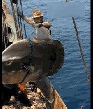捕起百斤大鱼,船上渔民脸色都变了,当场割断绳子,丢进水