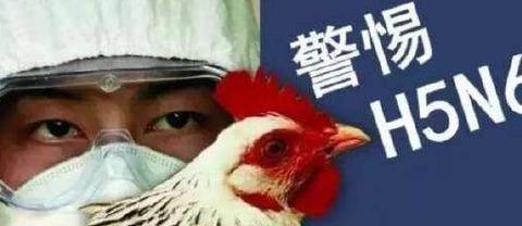 北京确诊一例H5N6禽流感病例,这是一种能够致死的危险病毒
