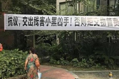 物业为防蚊虫,小区内喷农药,毒死业主狗狗,这小区热闹了!