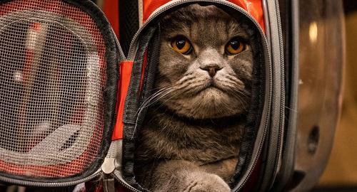 俄罗斯一猫星人要价1700万 称可以赶走女小三治疗晚上喝醉