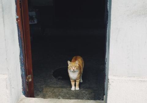 心酸!一门之隔,门里家猫挑食贪肉,门外流浪猫皮包骨头
