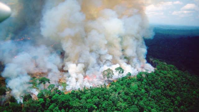 """视频:亚马孙森林大火持续燃烧16天 """"地球之肺""""被浓烟笼罩"""