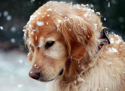 狗狗夏季爱的皮肤病怎么预防 夏季可以细菌滋生的高发期