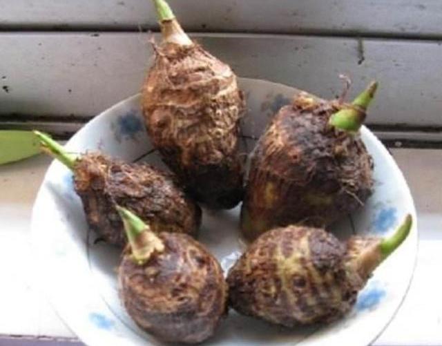 """这盆栽养一盆,比龟背竹好看,还能食用,被称作""""皇帝的贡品"""""""