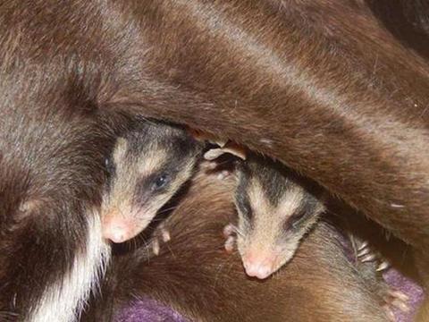 流浪狗收养了一窝小宝贝,长大之后的样子让人赞叹怎么可以这么萌