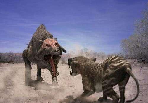 """猪竟然曾经站在食物链顶端?比剑齿虎都可怕,被称为""""沙土恶魔"""""""