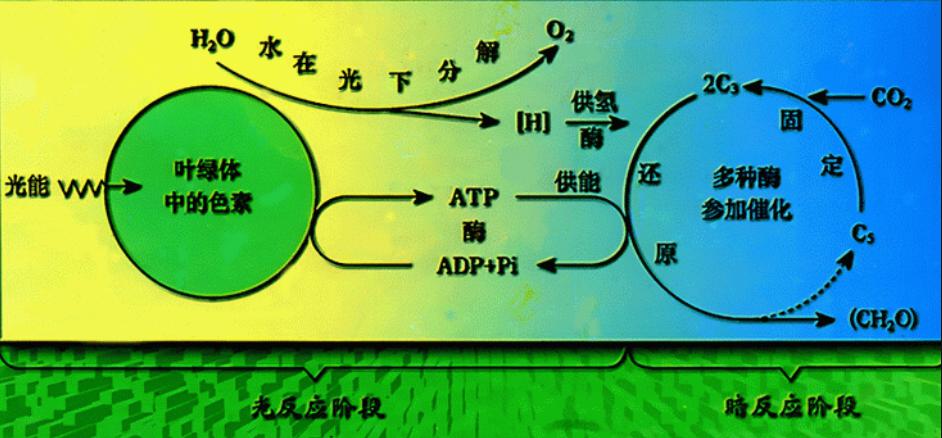 科学新突破,以黄金为基石,可利用光合作用制作液体燃料!