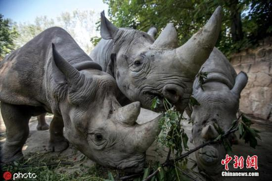 """善待动物!用指甲在犀牛背上""""刻字"""" 游客被斥愚蠢"""