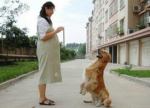 孕妇被狗咬伤导致流产,丈夫愤怒报警找狗主人,看到后不淡定