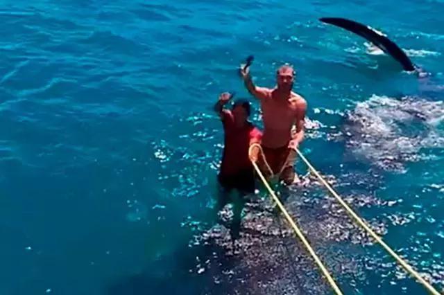 """最大鱼类遭人类""""调戏"""":两男子脚踩鲸鲨当冲浪板,鲸鲨拼命挣脱"""