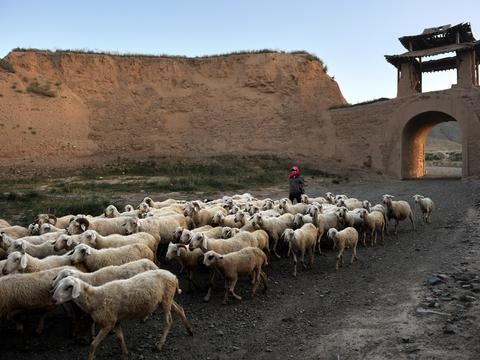 百年古城形如乌龟,城中居民牧羊农耕住矮房,生活原始却不愿迁出