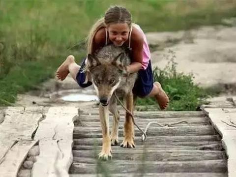 战斗民族女孩经常被五头狼驮着招摇过市