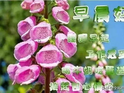 8月23日朋友圈早上好短信日常祝福语大全,最暖人心的早安图片