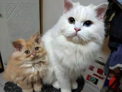 女主人正在拍照,白猫突然挤进镜头,挤眉弄眼逗得主人尴尬了!