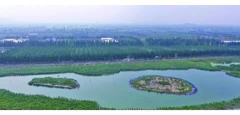 聚泥成岛,宜兴太湖湖滨,生态湿地修复创新路