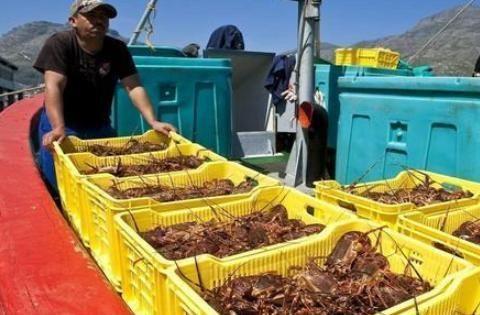 中国人非洲买了4只大龙虾,给500元后转身就走