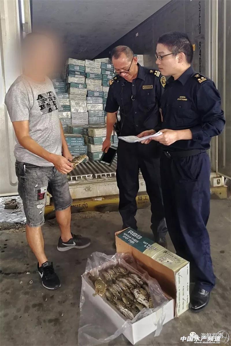 12.97吨进口冻梭子蟹未获检验检疫准入!因涉嫌伪瞒报被厦门海关截获并退运
