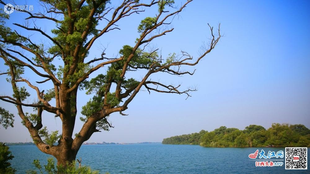 江西泰和:赣江金滩 美丽岸线