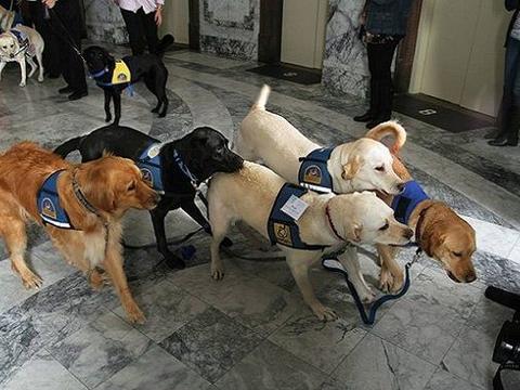 一群狗狗出现在法庭上,意外地治愈了情绪崩溃的证人