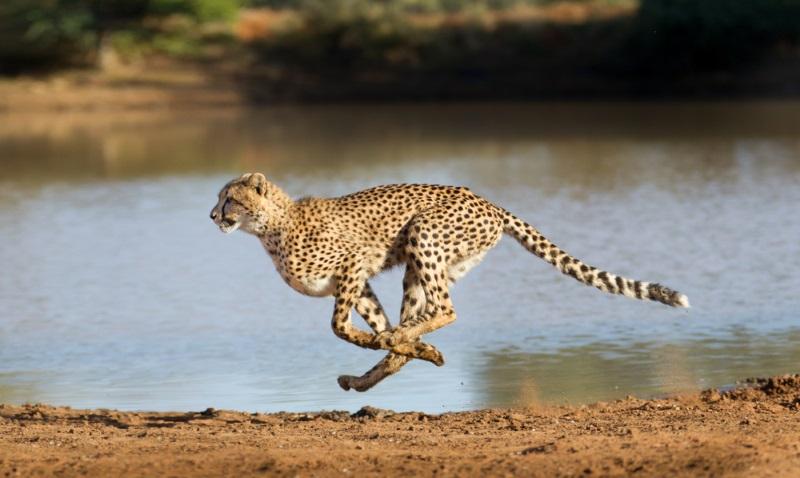 世界上10大猫科动物