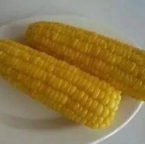 吃玉米不啃这个地方,等于浪费了整根玉米的营养精华!