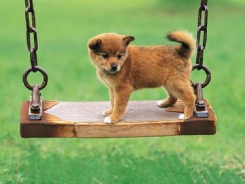 给第一次买狗人的建议,可以让你少花很多钱