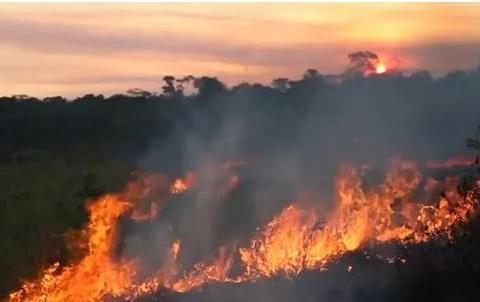 面对亚马逊雨林大火,人类只能祈祷吗