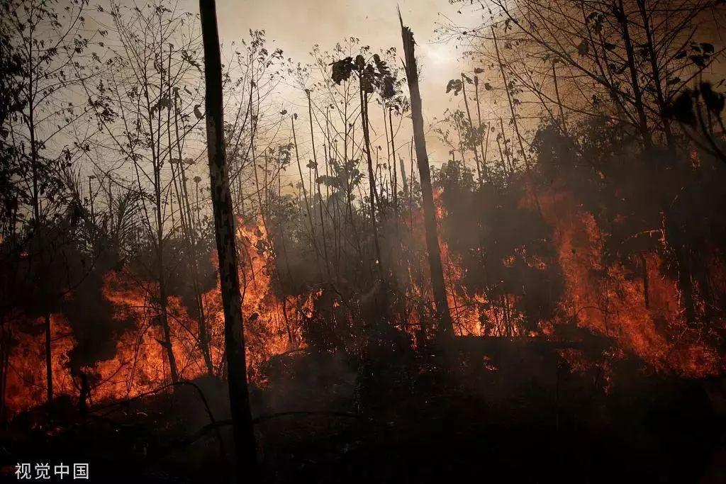 ▲当地时间8月23日,巴西韦略港,被烧毁的亚马孙丛林。图片来源/视觉中国