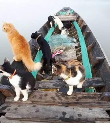 主人带着猫咪坐小船,猫咪坐在船头霸气无比:这片鱼塘本喵承包了