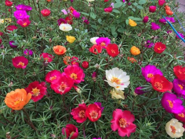 最喜欢晒太阳的几种花,越晒花开越艳