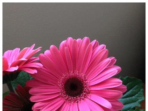 夏天别养杜鹃了,这些花朵开花美艳动人,盛开一夏,阳台变花海
