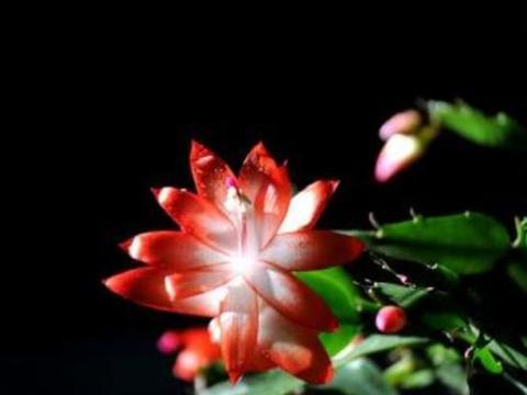 """适合秋天养的""""几种花"""",简单打理,轻轻松松爆盆,开花不断!"""