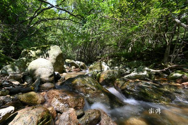 借助大熊猫国家公园体制试点 四川将修复9个基因廊道