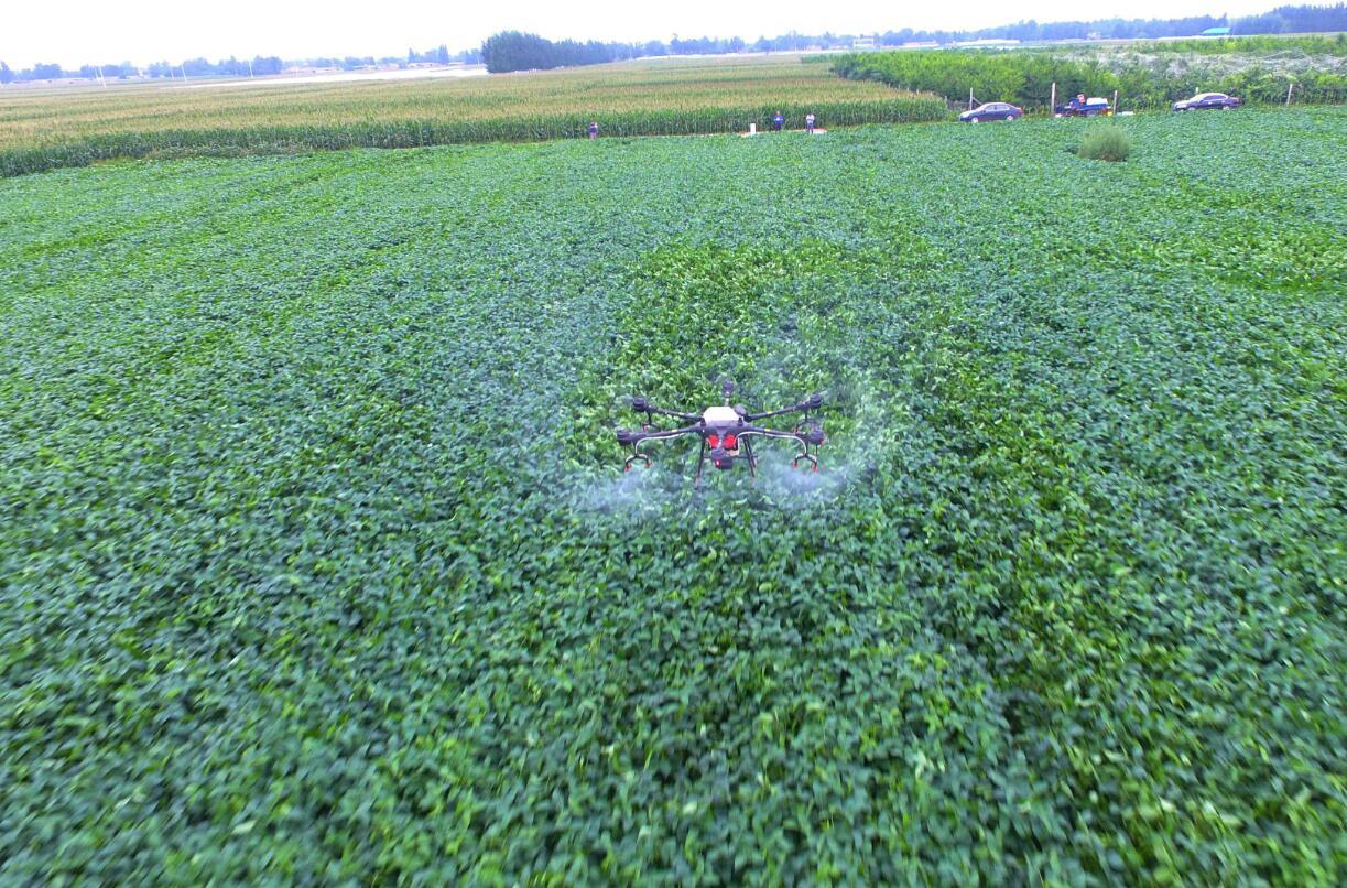 视频 聊城茌平托管大豆田,打药用上无人机
