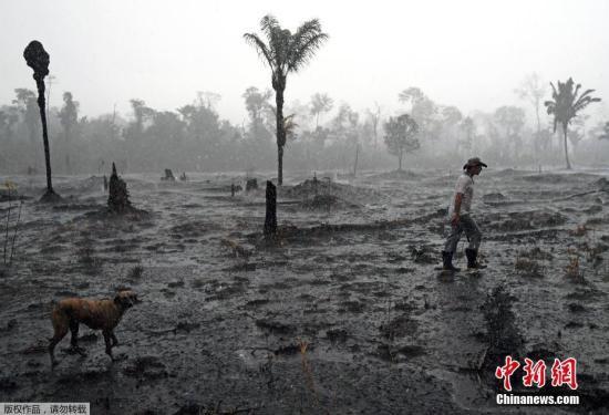 亚马孙雨林大火:巴西将接受金援 多国吁共商对策