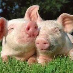 老百姓碗里不会缺肉:调控措施陆续出台 猪肉股怎么走