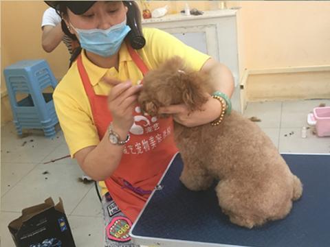 学习宠物美容师培训技术大概需要花多长时间